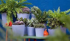 Nadrealna botanička paleta
